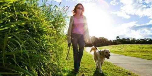 50 Ideas de negocios únicas relacionadas con mascotas Oportunidades en 2020