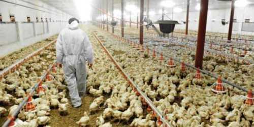 9 mejores formas de realizar estudios de mercado para su granja avícola