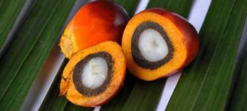 Cómo iniciar un negocio exportando aceite de palma de Nigeria