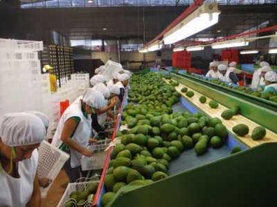 Ganar dinero en la industria de exportación sin exportar