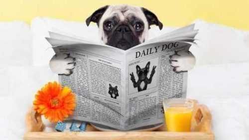 Iniciar un negocio de tratamiento de perros en casa
