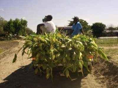Inicio de una granja de algodón: plantilla de plan de negocios de muestra