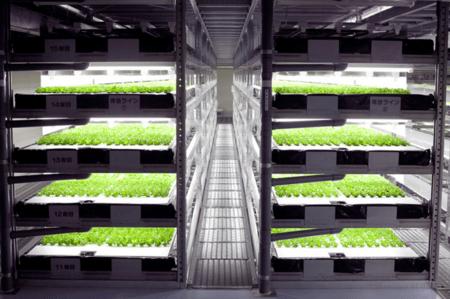 Inicio de una granja hidropónica: plantilla de plan de negocios de muestra