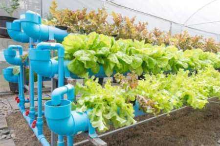 Inicio de una plantilla de plan de negocios de invernadero de granja orgánica