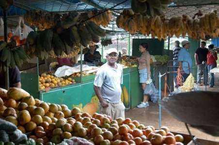 Una muestra de plantilla de plan de negocios de exportación de mango