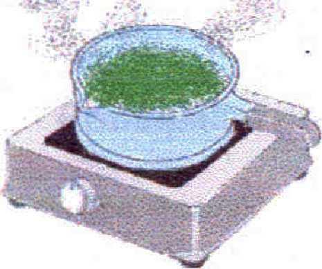 Una muestra de plantilla de plan de negocios de extracción de aceite esencial